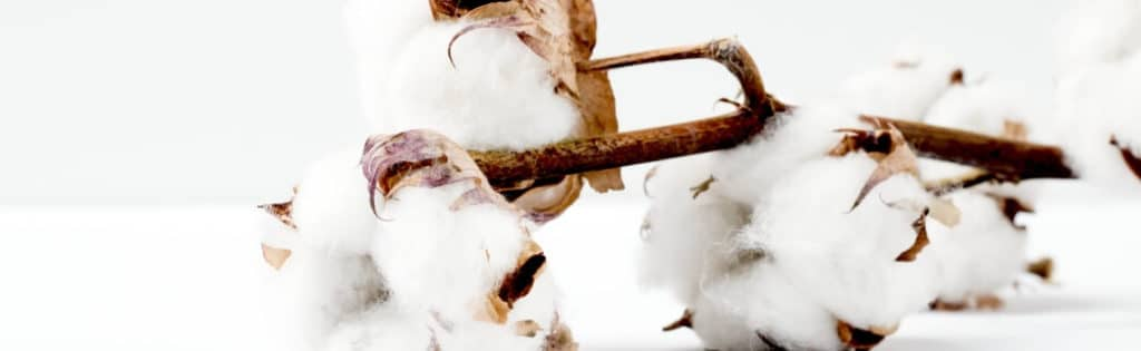 Branche de coton - Pantalon en coton bio GOTS
